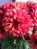 Flor 1 Imagen de archivo