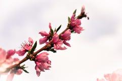 Flor Imágenes de archivo libres de regalías