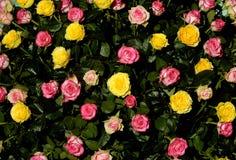Flor 48 Fotografía de archivo libre de regalías