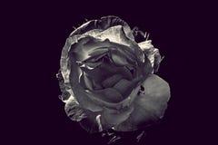 Flor 1 Foto de Stock