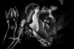 Flor 4 Foto de Stock