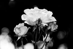 Flor 5 Imagens de Stock