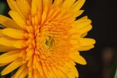 Flor, Fotos de Stock Royalty Free