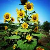 Flor Fotos de archivo
