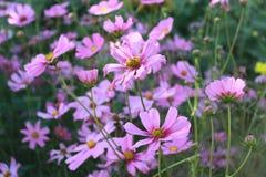 Flor Foto de Stock Royalty Free