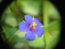 Flor foto de stock