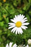 Flor Imagem de Stock Royalty Free