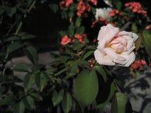 Flor Imagem de Stock