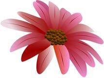 Flor 3 Imagen de archivo libre de regalías