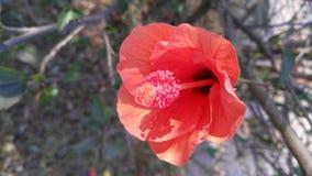 Flor Fotografia de Stock Royalty Free