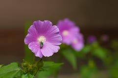 flor Royaltyfri Fotografi