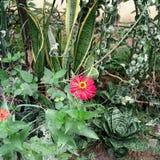A flor imagens de stock royalty free