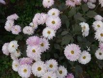 Flor Imagenes de archivo