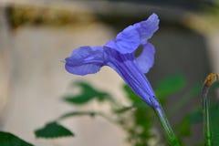 Flor Fotos de archivo libres de regalías