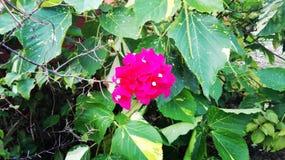 flor Arkivbilder