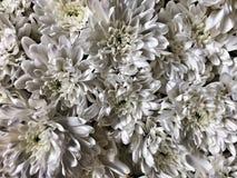 Flor Fotografia de Stock