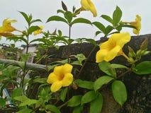 Flor Foto de archivo libre de regalías