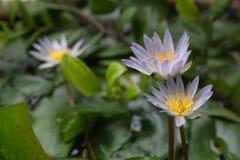 Flor fotografía de archivo