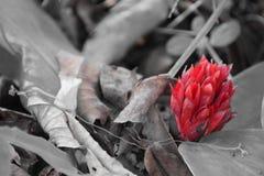 Flor abandonada Imagen de archivo libre de regalías