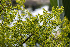 Flor abierta de la palma Imagenes de archivo