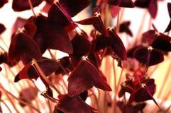 Flor abstracta Fotos de archivo
