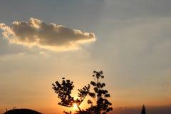 Flor abstracta en la puesta del sol, fondo de la luz del sol Imagen de archivo