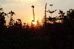 Flor abstracta en la puesta del sol, fondo de la luz del sol Imagenes de archivo