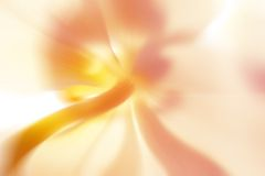 Flor abstrata Imagem de Stock