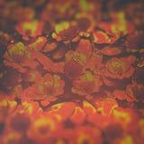 Flor abstrata Art Background imagem de stock