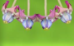 Flor abstrata do molde no fundo verde Fotos de Stock Royalty Free
