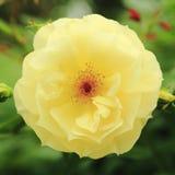 Flor acima 4 próximos fotos de stock royalty free