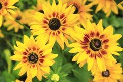 Flor acima 7 próximos fotos de stock