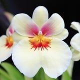 Flor acima 13 próximos Imagem de Stock