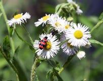 Flor agradável Imagem de Stock