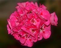 Flor agradável Fotografia de Stock