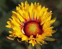 Flor agradável Fotos de Stock
