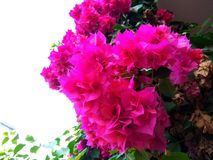 Flor agradável imagem de stock royalty free