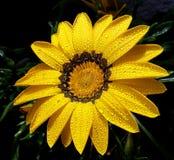 Flor agradável da mola Fotografia de Stock Royalty Free