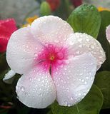 Flor agradável do verão Imagens de Stock