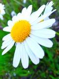 Flor agrad?vel foto de stock royalty free