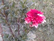 Flor agradable Imágenes de archivo libres de regalías
