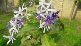 Flor agradable con un fondo natural de lite fotografía de archivo