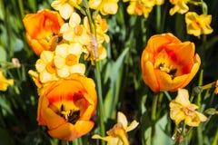 Flor agradable en el parque en día agradable Fotografía de archivo libre de regalías