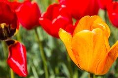 Flor agradable en el parque en día agradable Imagenes de archivo