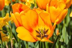 Flor agradable en el parque en día agradable Imagen de archivo libre de regalías