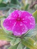 Flor agradable imagen de archivo libre de regalías