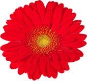 Flor aislada con un fondo blanco imagen de archivo