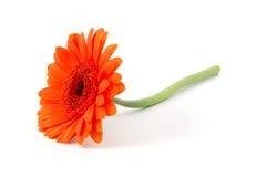 Flor aislada en blanco foto de archivo libre de regalías