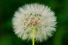 Flor aislada en un fondo verde fotografía de archivo