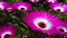 Flor al azar Imagen de archivo